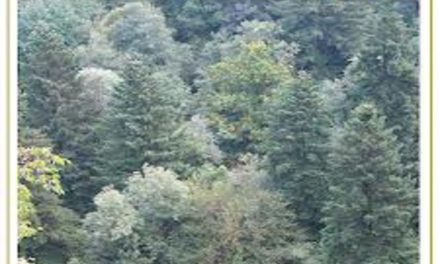 Marcia degli Alberi 2014 – La Foresta che cammina
