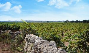 Escursione nelle terre del primitivo con Legambiente Taranto