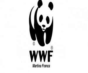 Presidio WWF Martina Franca in difesa delle uova della tartaruga Caretta Caretta