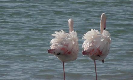 """""""Tra il sale e il mare"""", sabato 2 febbraio escursione guidata gratuita alla Salina Monaci di Manduria"""