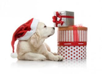 A Natale…impacchetta l'amore con l'OIPA Taranto