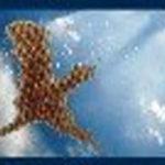 """L'Associazione """" Sopravvivenza e vita eterna"""" lancia un appello a tutti i suoi amici: """"Preghiamo tutti insieme"""""""