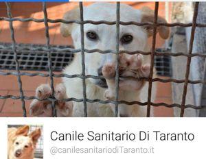 Al canile sanitario municipale di Taranto si cercano volontari
