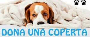 Emergenza freddo, le associazioni animaliste e il Comune di Taranto cercano coperte per i randagi del territorio